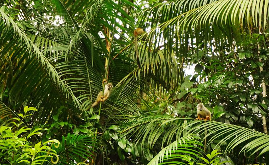 AMAZON JUNGLE ECUADOR | ANYDOKO