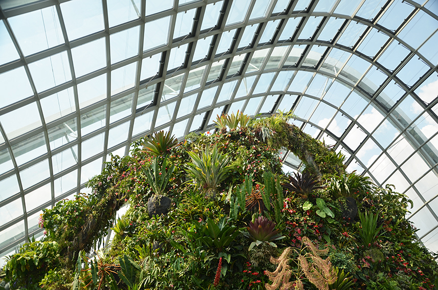 Cloud Forest Singapore Dome | Travel Inspiration | ANYDOKO