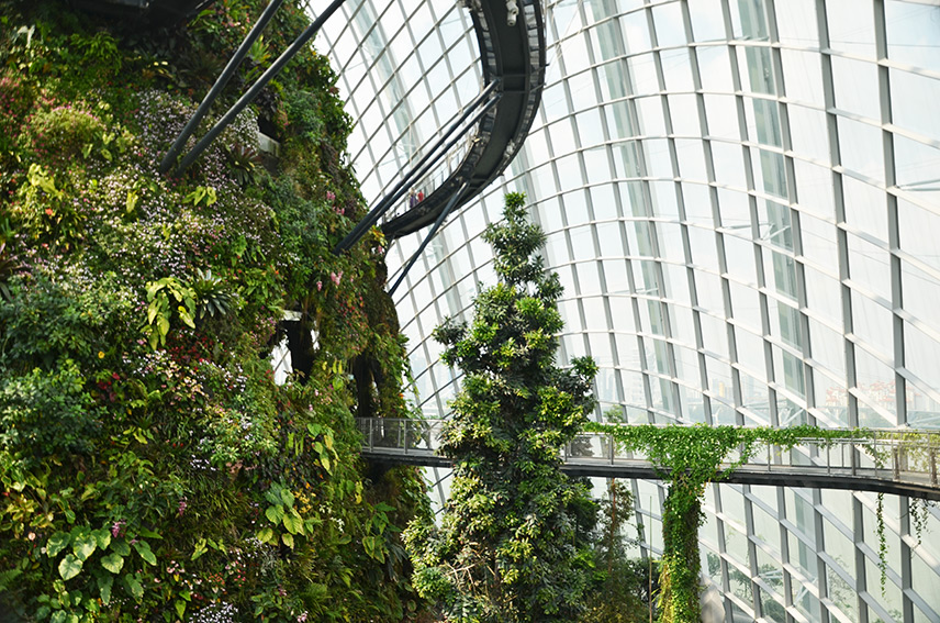 Cloud Forest Singapore Walkway | Travel Inspiration | ANYDOKO