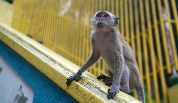 Monkey At The Batu Caves | THE BATU CAVES IN MALAYSIA | ANYDOKO | Malaysia Travel Video